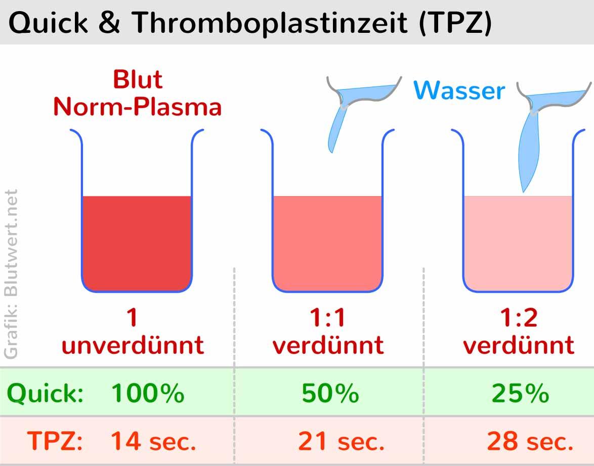 Read more about the article Der Quick-Wert: Warum sagt man zu Thrombozytenaggregationshemmer eigentlich Blutverdünner?